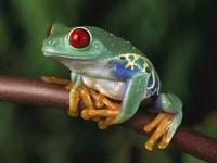 Зеленая лягушка с желтыми лапками