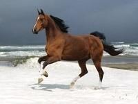 Коричневая лошадь, бегущая по снегу