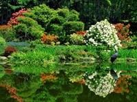 Сад с водоемом и цаплей