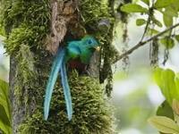Экзотическая птичка в гнезде