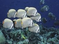 Белые рыбки на дне моря