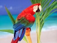 Разноцветный попугай на пальме