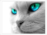Серый кот с зелёными глазами