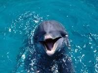 Дельфин в океане