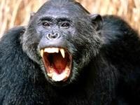 Кричащая обезьяна