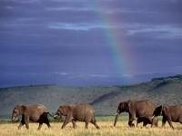 Слоны в степи после дождя