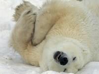 Игры белого медведя