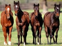Четыре лошади в загоне