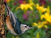 Серо-синяя птица на стволе