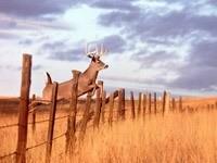 Олень, прыгающий через забор