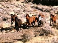 Бегущие лошади