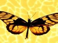 Желто-черная бабочка