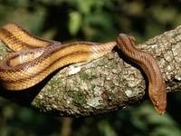 Змея на стволе