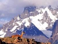 Животное в горах