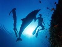 Дельфин и люди под водой