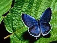 Синяя бабочка на зелёном листке