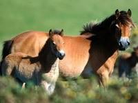 Лошадь с жеребёнком на лугу