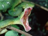 Пасть змеи