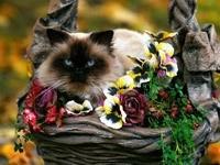 Персидский кот в корзине с цветами