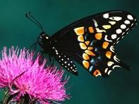 Красочная бабочка на клевере