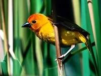 Желто-черная птичка на ветке