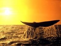 Хвост кита на закате