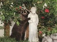 Енот со статуей