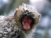 Мартышка в снегу