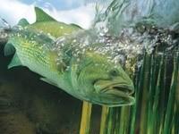 Рыбка на поверхности воды