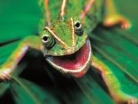 Зелёный тритон