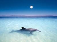 Дельфин ночью в океане