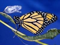 Желто-черная бабочка на стеле