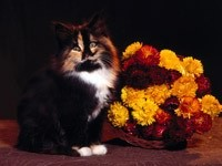Черный котик и цветы