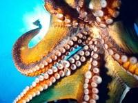 Щупальца осьминога