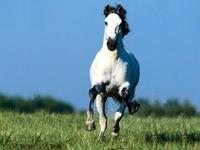 Галоп белой лошади