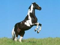 Лошадь встала на дыбы