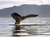 Хвост кита над уровнем моря