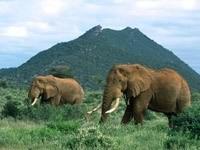 Два слона возле гор