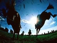 Прыжок лошадей