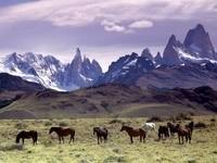 Табун лошадей  возле гор