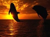 Прыжок дельфинов на закате