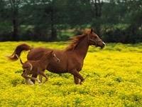 Коричневая лошадь с жеребёнком