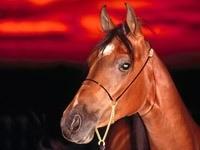 Морда лошади на фоне заката