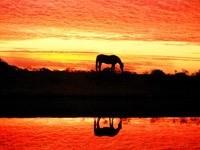 Пасущаяся лошадь на закате