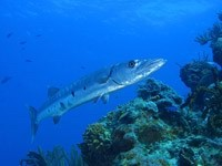 Рыба на дне океана