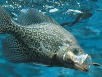 Охота рыб