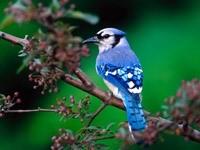 Птица в синей гамме цветов