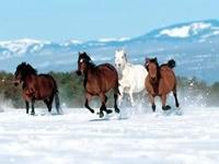 Бегущие лошадки на снегу