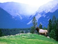 Олень в горах