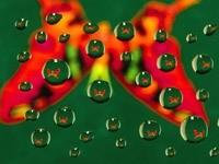 Бабочка в капельках воды